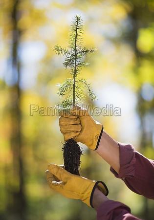 environment enviroment tree dirt outdoor outdoors