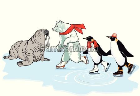 winter polar bear ice frost penguin