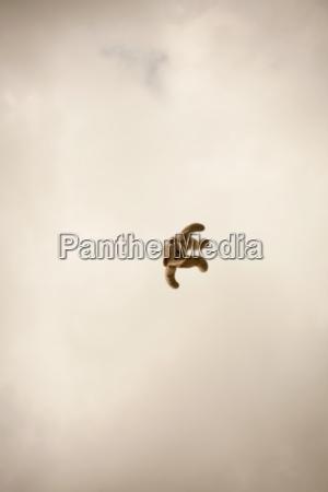 teddy bear in mid air