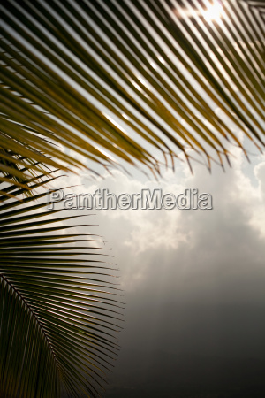 palm leaves and storm clouds hawaii