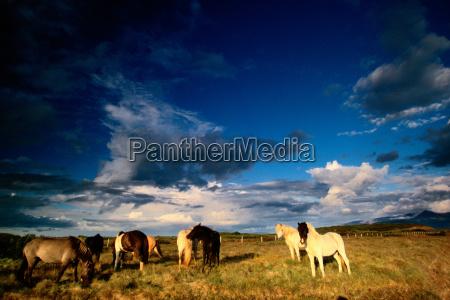horses sunbathe in a glimpse of