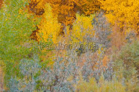 fall color arizona usa