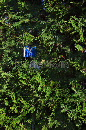 house number in a hedge