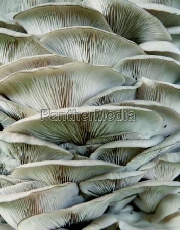 white fungus close up