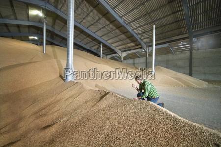 agricola agricultura interior verao grao colheita