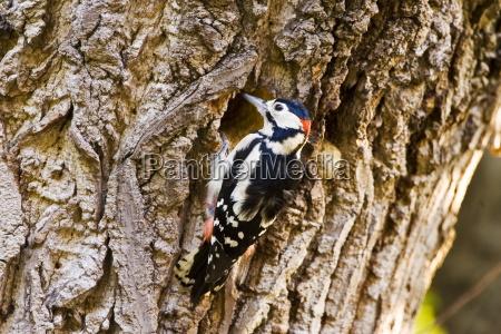 color animal los animales aves horizontalmente