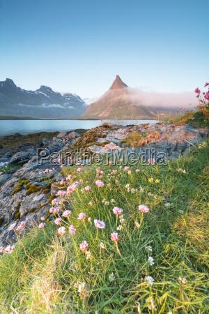 luz paseo viaje color flor planta