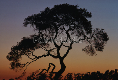 arbol puesta del sol eeuu tarde