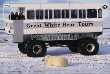paseo viaje animal mamifero trafico oso