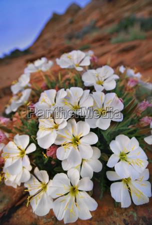 primer plano flor planta eeuu al