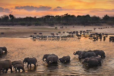 animal mamifero puesta del sol africa