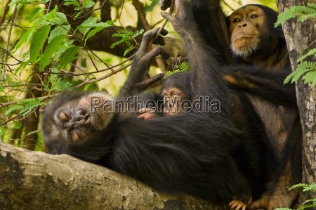 arbol animal mamifero africa horizontalmente al