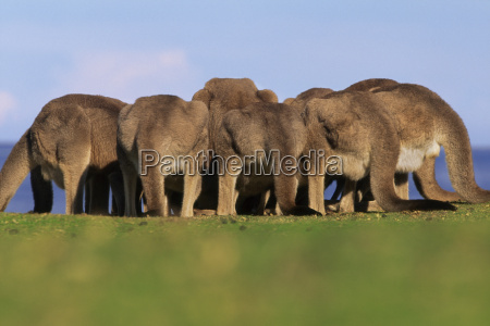 animal mamifero australia horizontalmente al aire